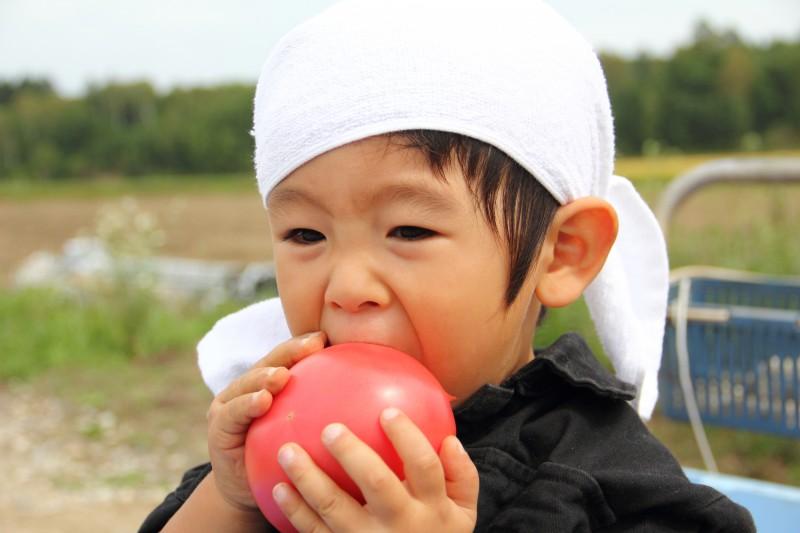 おやつにもぴったりのトマトは大人気