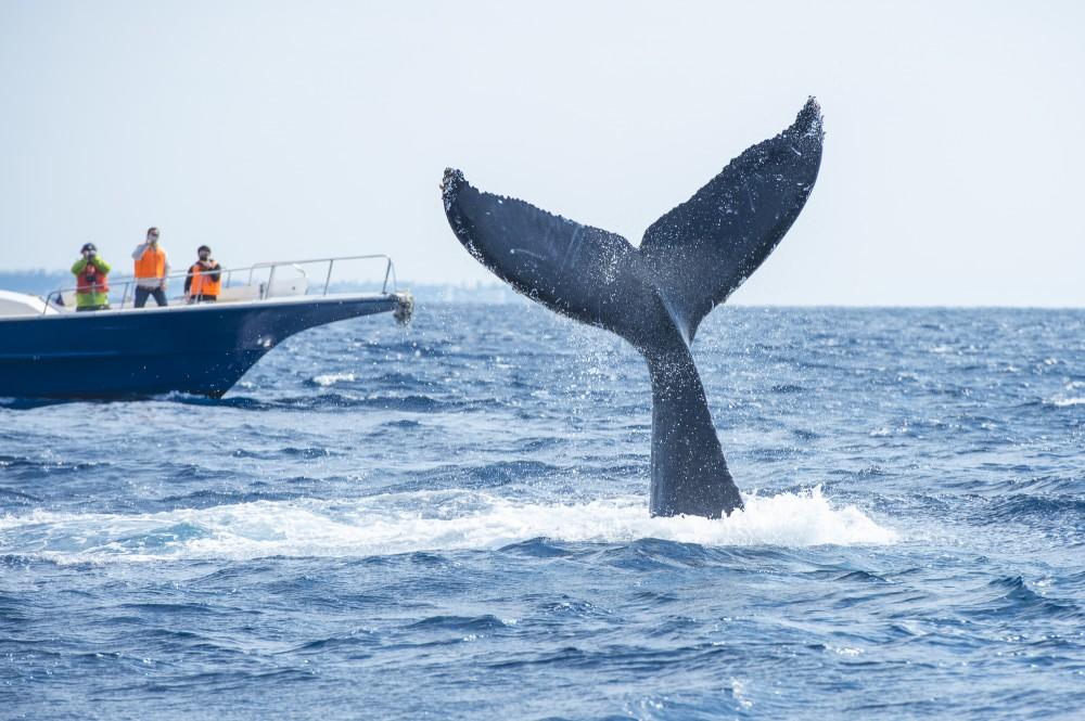 大きな海で見るクジラはより迫力がありそうです。