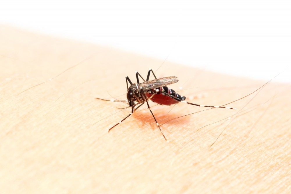 この時期1度は刺される蚊。掻きむしると、とびひの原因に