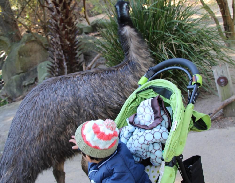 KidZooでは珍しい動物もこんな間近で見られる
