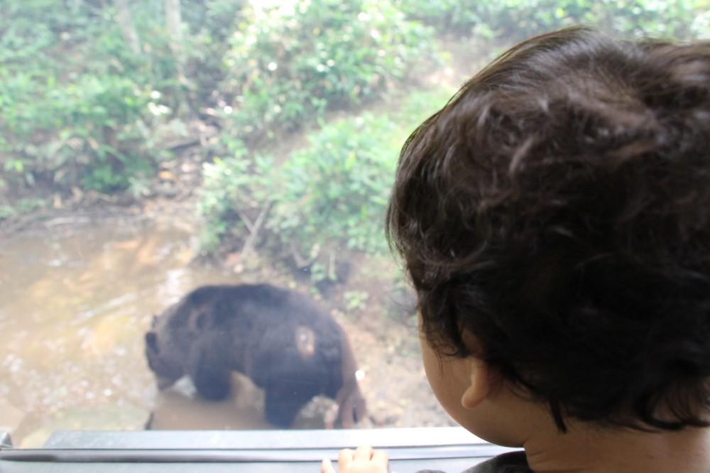 窓のすぐ外に大きなヒグマが!