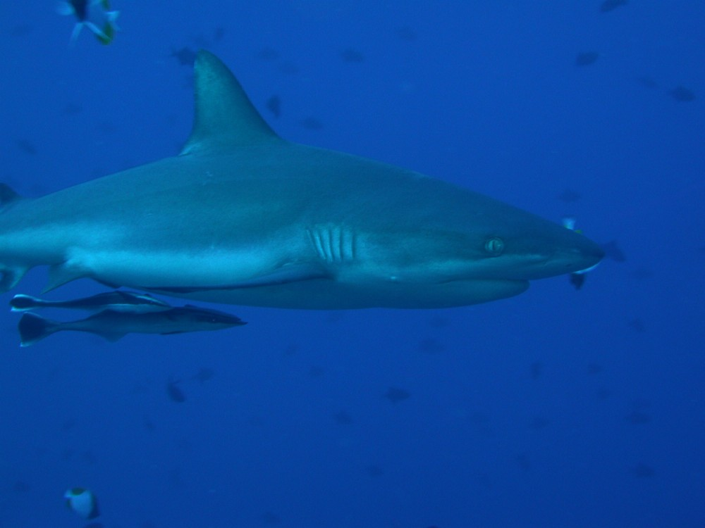 怖っ!! 海水浴場にサメが現れた!