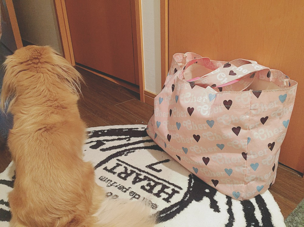 ママ、荷物置いてったよby犬