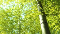 公園で竹30本が伐採される!関西で起きた怪事件の真相とは?