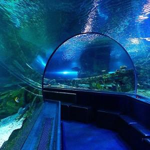 UNDER WATER WORLD。まるで海の中にいるみたいですね。ちなみに、トンネルの中で食事ができるプランもあるようです。