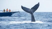 クジラの死骸が漂着! 死んだクジラじゃなく、生きたクジラが見たい!