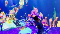 「今日どこ行く?」と迷ったら、「チームラボ お絵かき水族館」へ!【Happy Activities番外編】