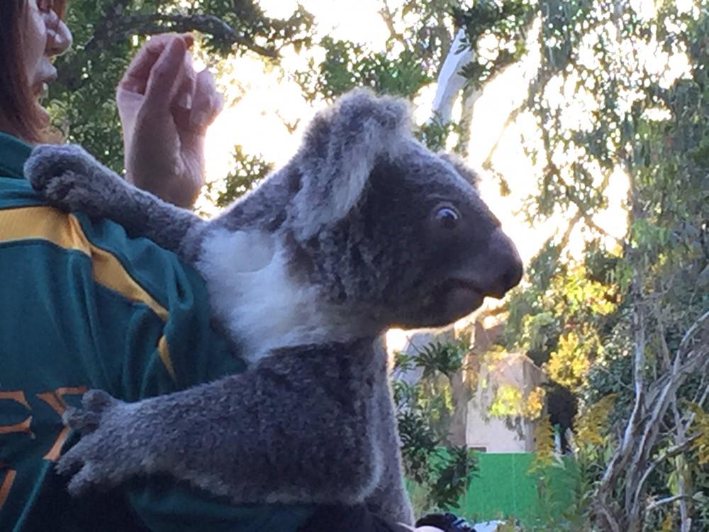 閉園ギリギリでしたが、あまり見ることができないコアラを間近で見れました。
