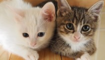 【ワーママ家庭のペット事情】子どもが飼いやすい動物って? メリットとデメリット