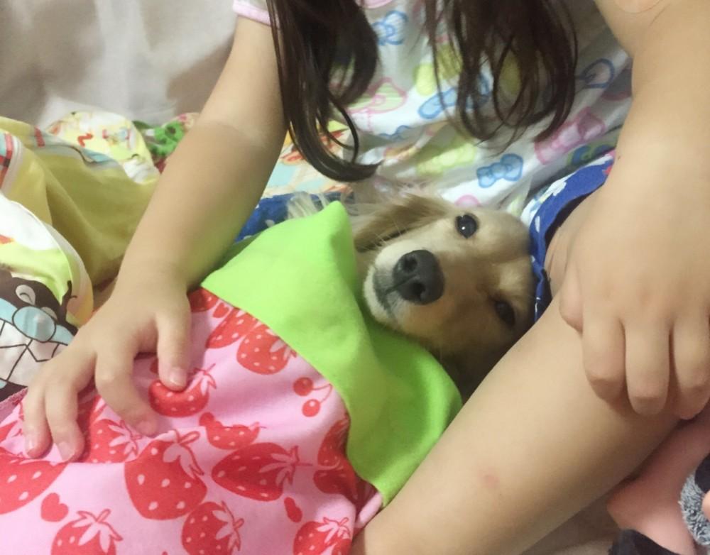 自分が寝ないで犬の寝かしつける娘