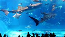 【目指せ、海の生き物博士】子どもの好きを究められる「水族館」3選!